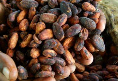 Trading Online Cacao investire, quotazione e prezzo