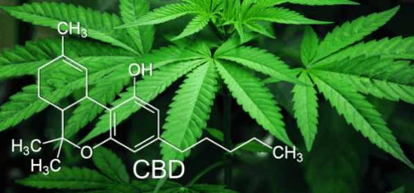 investire-in-aurora-cannabis